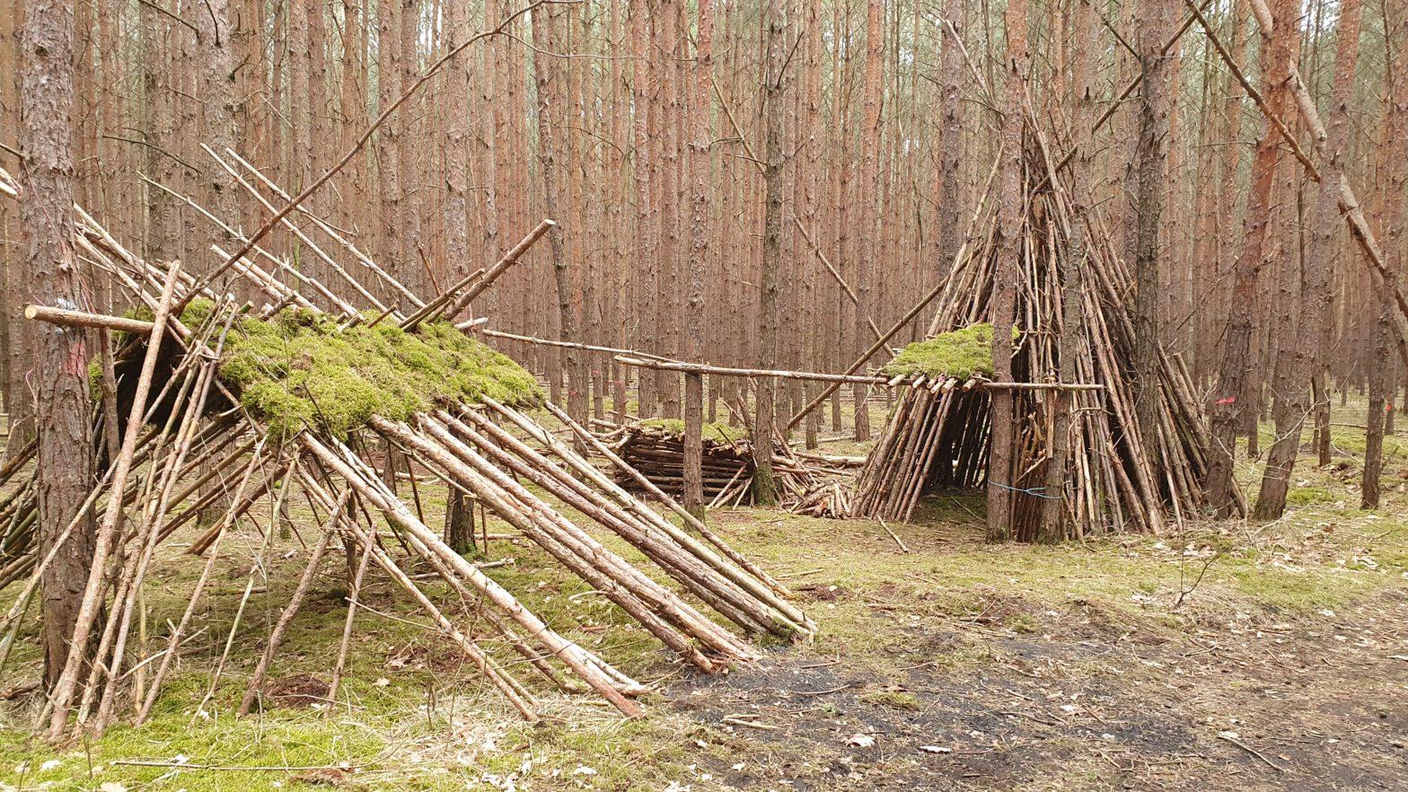 Hütten im Kiefernwald